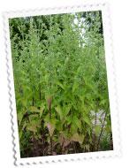 herbularium